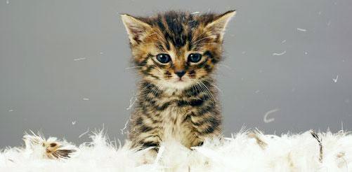 پت شاپ شاپرک، کاملترین عرضه کننده غذا و محصولات جانبی نگهداری گربه ها