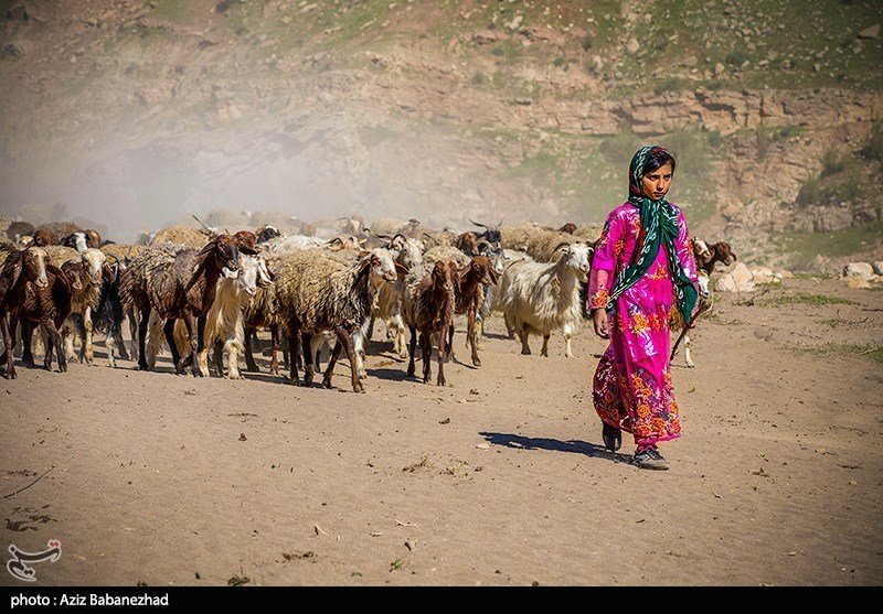 عبور عشایر از خرم آباد
