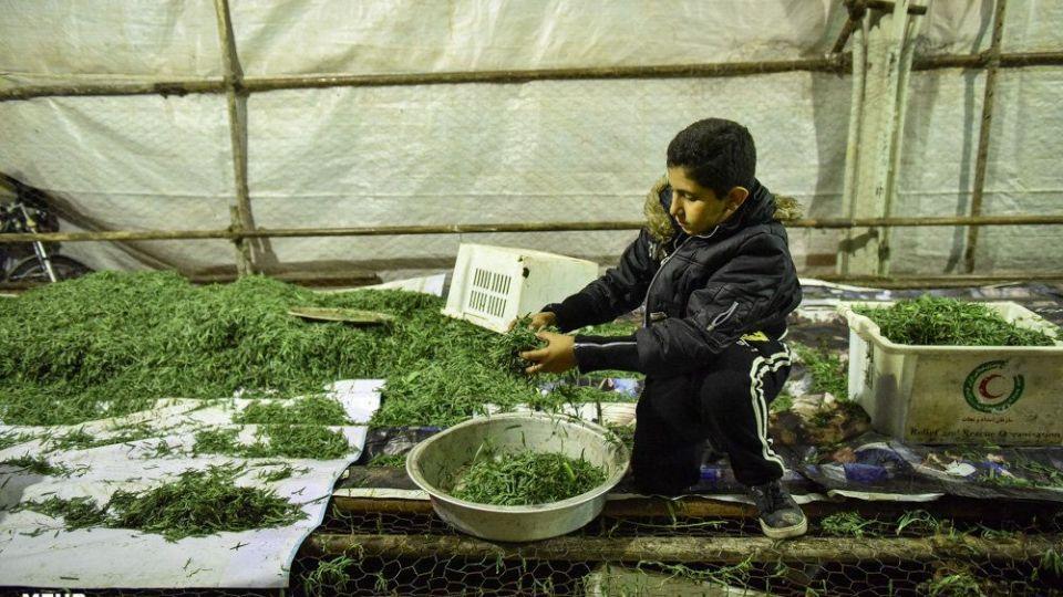 پخت 84 هزارکیلو آش نذری در شیراز