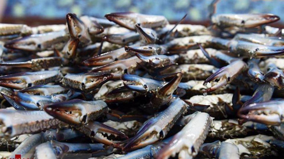 بازار ماهی کویت