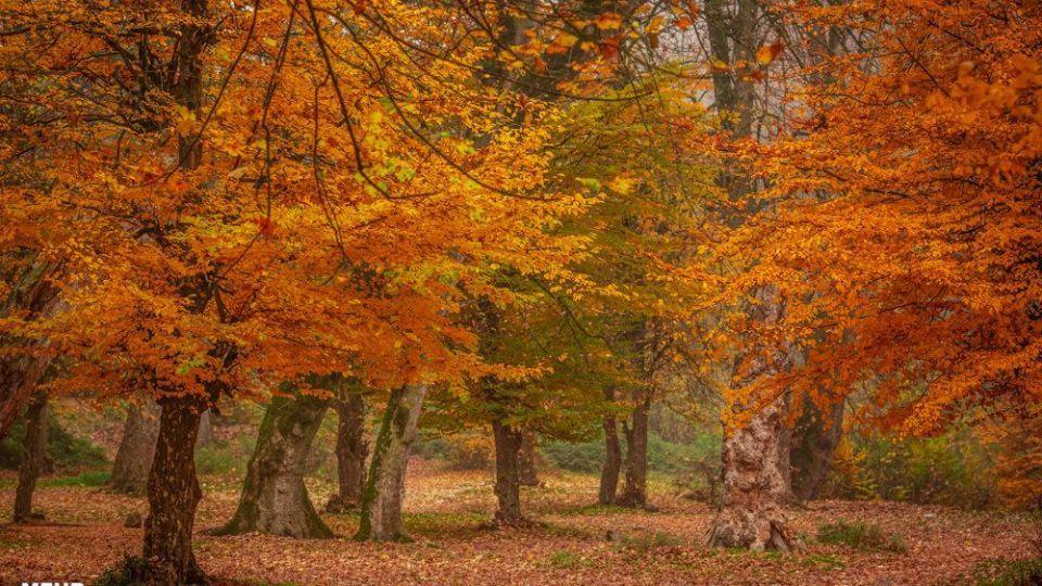 پاییز هزار رنگ جنگلهای هیرکانی