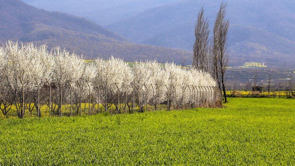 طبیعت زیبای بهاری در گلستان