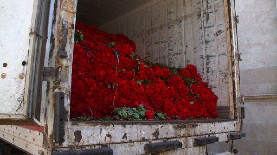 ماجرای مهریه یک میلیون شاخه گل در کرمان چه بود؟