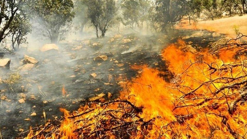 واکنش ها به سوختن زاگرس در آتش