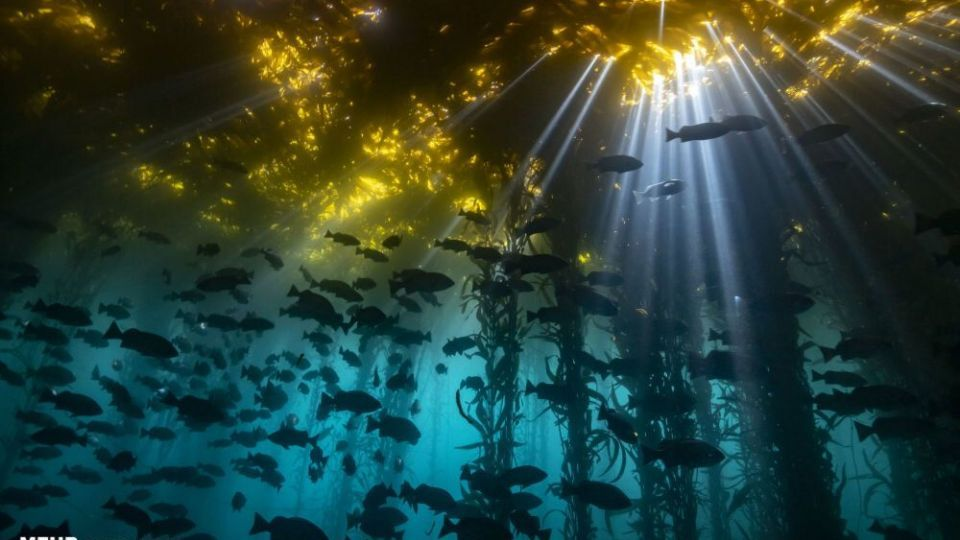 دنیای اعماق اقیانوس از نگاه عکاسان
