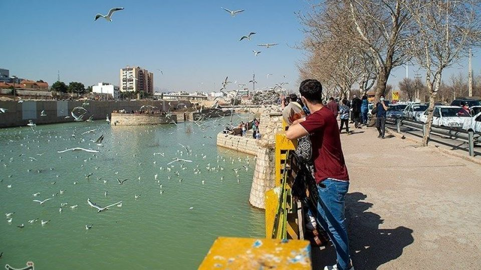 میهمانان ناخوانده زمستان شیراز