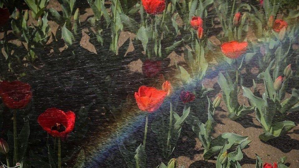 باغ گل ها - البرز