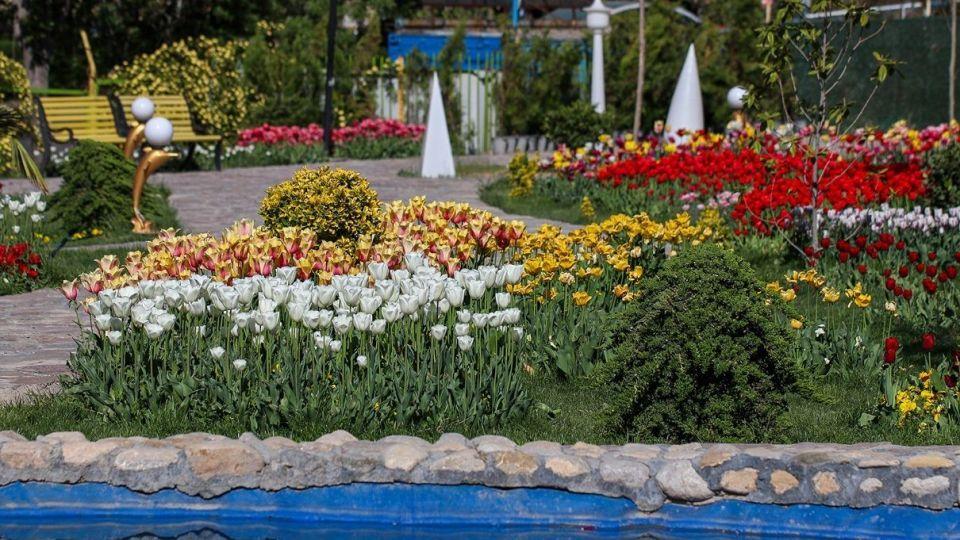 بهار مستعجل - سیستان
