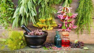۴ خوراکی گیاهی که باعث شادابی میشود