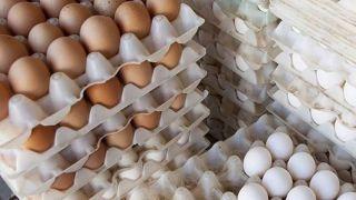 فشار دولت بی نتیجه ماند؛ افزایش دوباره قیمت تخم مرغ