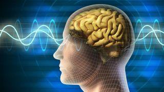 کشف یک قسمت جدید در مغز انسان