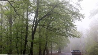 زیبایی های جنگل و مه